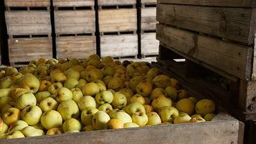 Rosja ogranicza import jabłek z Białorusi