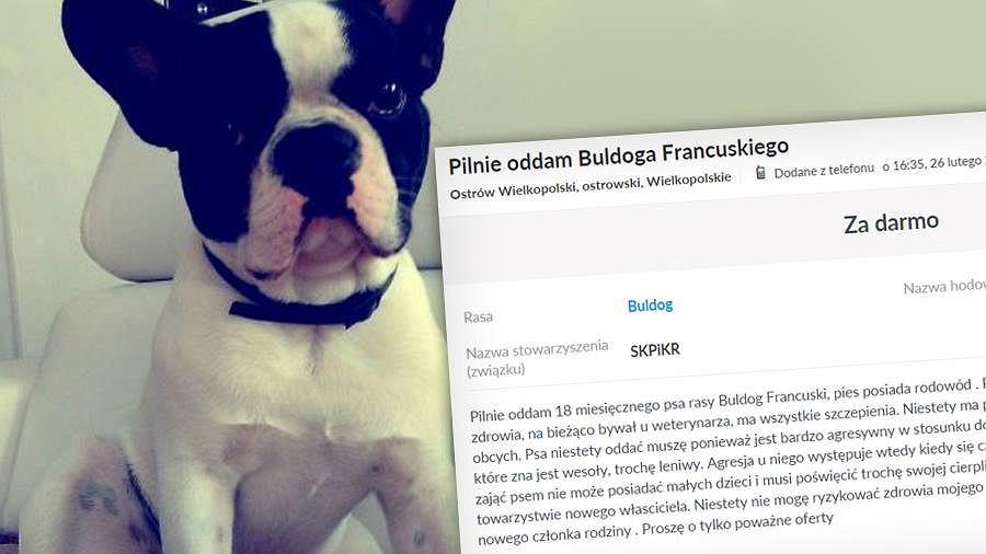 Nietypowe ogłoszenie w serwisie olx.pl