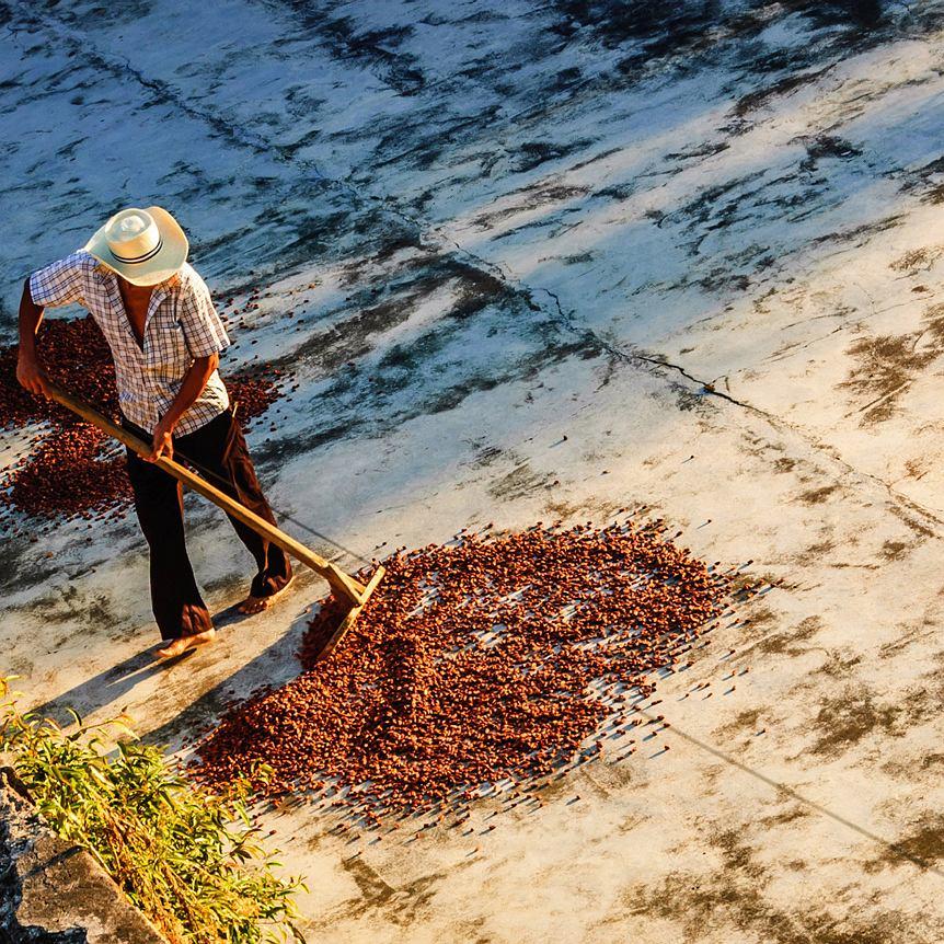 Guatemala, suszenie ziaren kakao na plantacji Takalik Maya Lodge w pobliżu Tak'alik Ab'aj prekolumbijskiego stanowiska archeologicznego przy granicy z Meksykiem