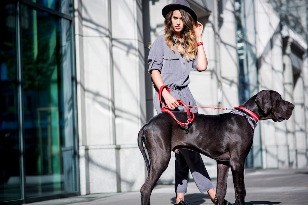 delCane - akcesoria dla psów