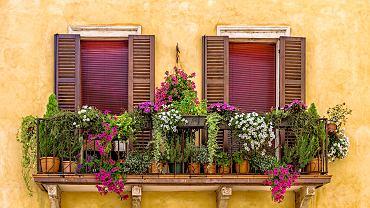 Ciekawe kwiaty na balkonie występują w wielu odmianach i kolorach.