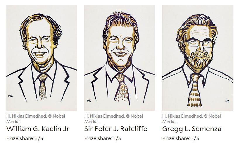 Laureaci Nagrody Nobla w dziedzinie fizjologii i medycyny 2019