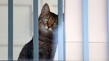 Na balkonie najważniejsza jest siatka, ale warto pomyśleć też o 'punkcie monitoringu', bo psy i koty dla zdrowia psychicznego muszą obserwować okolicę