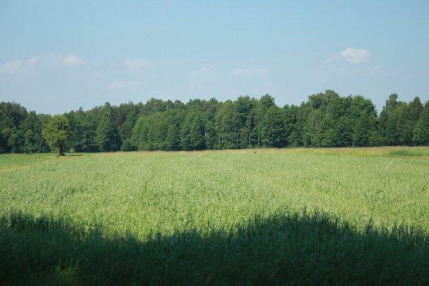 Lokalny Rolnik dostał 1 mln zł na rozwój. Zainwestowali m.in. Lewandowscy