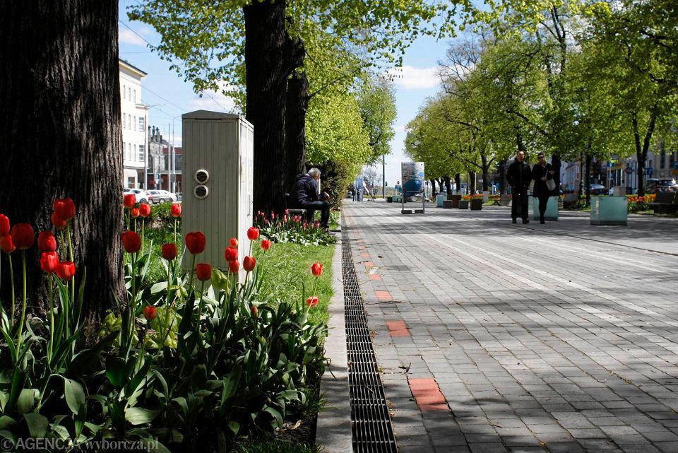 Zdjęcie numer 29 w galerii - Przy betonowej alei kwiatowej  wyrosły kwiaty. Tulipany o niezwykłych barwach