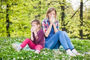 Co pyli w maju? Sprawdź kalendarz alergika w tym miesiącu