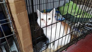 Rudolf, więzienny kot do adopcji