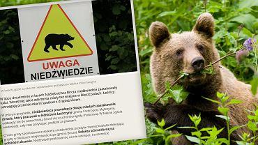 Co zrobić, jeśli zaliczysz bliskie spotkanie z niedźwiedziem?