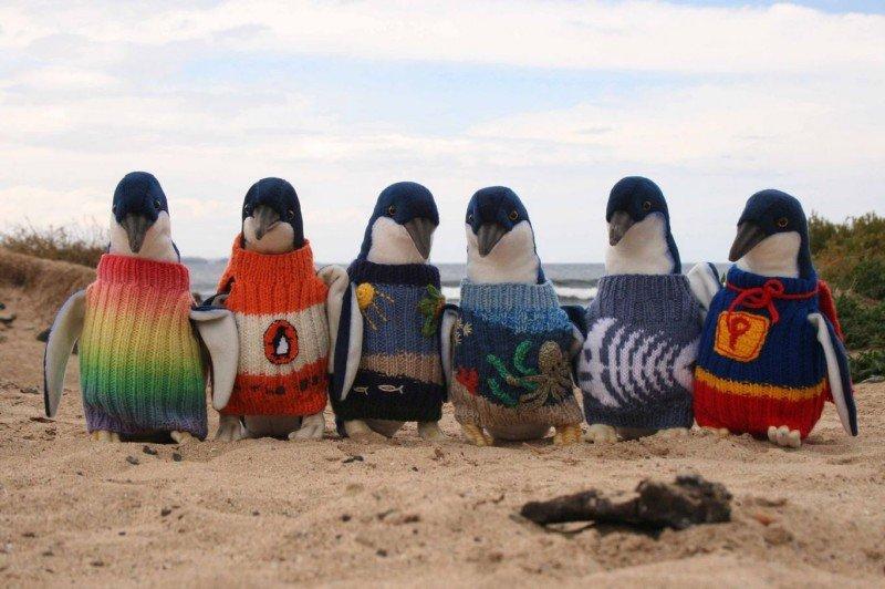 Małe pingwiny - manekiny prezentują prawidłowo wykonane sweterki