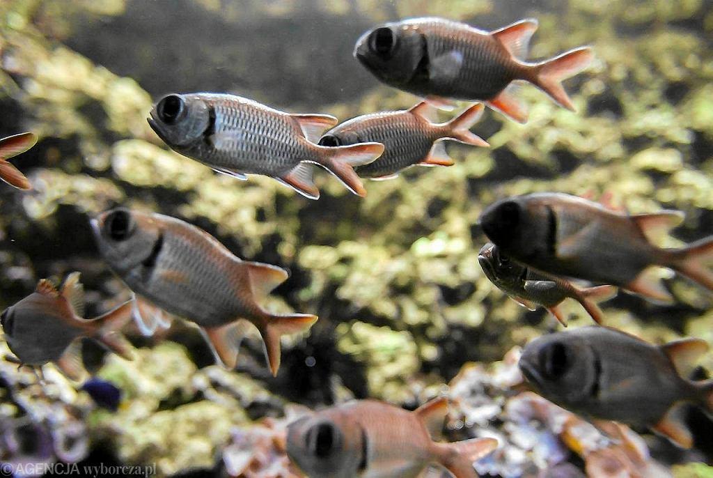 dużo ryb w morzu randki