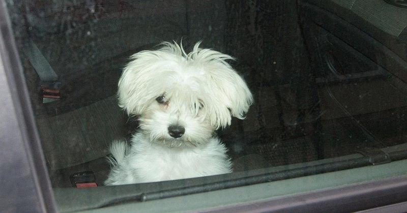 Pies zatrzaśnięty w samochodzie