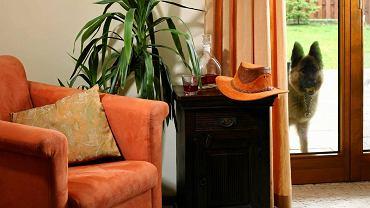 Miękka wykładzina dywanowa ociepla wnętrz, jest też dobrym sposobem na ukrycie defektów podłogi. Jak ją ułożyć? Oto krótka instrukcja.