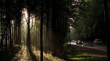 Sopot Trójmiejski Park Krajobrazowy / fot. Dominik Sadowski / AG