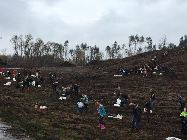 Zdjęcie numer 0 w galerii - 700 osób sadziło las na terenach zniszczonych przez wichurę [ZDJĘCIA]