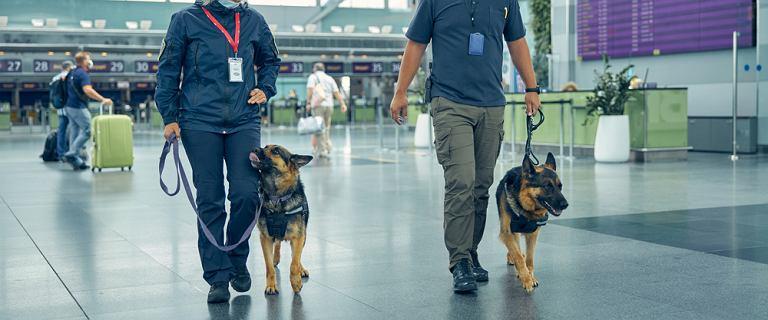 """Na lotnisku w Helsinkach """"zatrudniono"""" psy do walki z koronawirusem. """"To prawdziwi bohaterowie naszych czasów"""""""