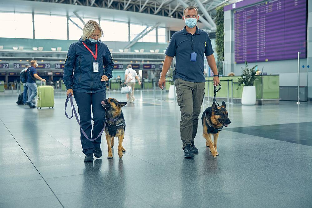 Na lotnisku w Helsinkach zatrudniono psy wykrywające koronawirusa (zdjęcie ilustracyjne)