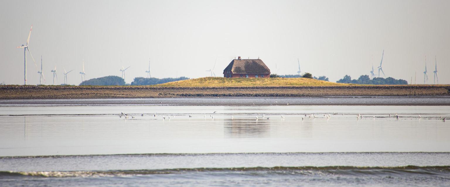 Jedna z wysp z terpem, na którym stoi dom (fot. Detlef Haag)