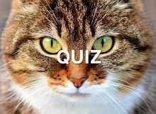 Myślisz, że znasz się na kotach? Ten ekstremalny quiz pokaże ci, ile tak naprawdę wiesz