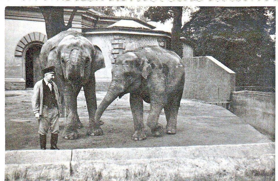 Słonie w przedwojennym zoo