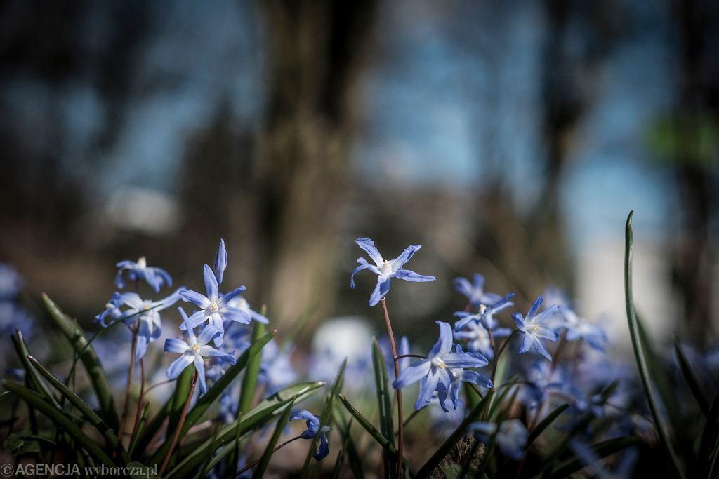 Wiosna w Ogrodzie Botanicznym w Poznaniu
