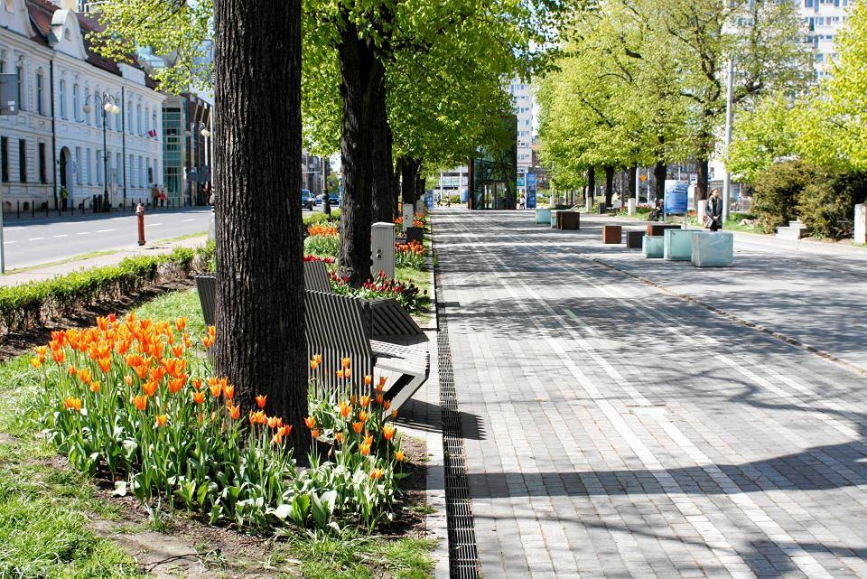Zdjęcie numer 28 w galerii - Przy betonowej alei kwiatowej  wyrosły kwiaty. Tulipany o niezwykłych barwach