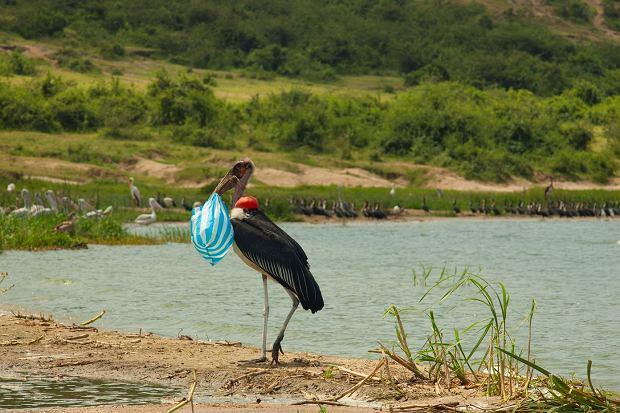 Ptaki nauczyły się korzystać z plastiku / Fot. Shutterstock