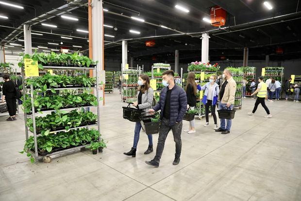 Zdjęcie numer 17 w galerii - Zazieleniły się targi w ten weekend. Trwa Festiwal Roślin i ich wyprzedaż. Zobacz, co można tam kupić  [ZDJĘCIA]