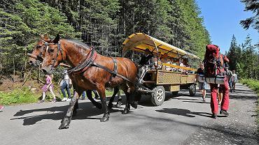 Konie pracujące na drodze nad Morskie Oko