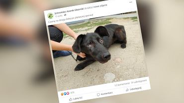Czarnków. Pies został postrzelony kilkadziesiąt razy. Policja szuka sprawcy (zdjęcie ilustracyjne)