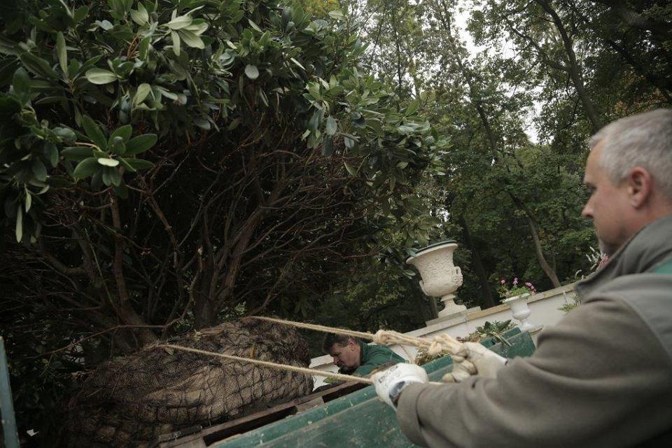 łazienki Królewskie Chińczycy Już Mają Ogród Teraz Swój