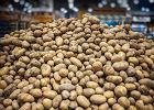 Rekordowo wysokie ceny ziemniaków w tym sezonie. Wszystko przez susze
