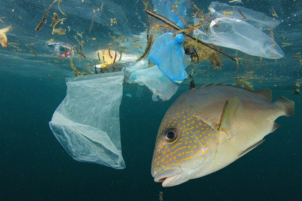 UE chce walczyć z plastikowymi śmieciami w morzach