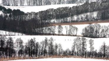 Znamy zwycięzców pierwszej polskiej edycji konkursu Wiki Lubi Przyrodę. Spośród blisko 3960 zdjęć jury wybrało trzy najlepsze, przyznano także siedem wyróżnień i nagrodzono pięć fotografii w dodatkowych kategoriach. Pierwsza nagroda w kategorii ogólnej. Park krajobrazowy Suwalski Park Krajobrazowy. Krajobraz okolic Szurpił.