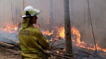 Pożary w Australii. Zdjęcie ilustracyjne