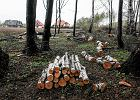 Proboszcz w Racławówce wyciął kilkadziesiąt drzew. Interweniowała policja [FOTO]