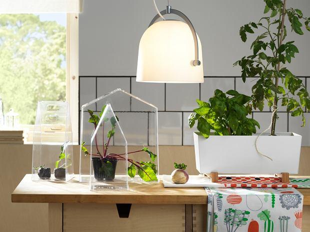 Zimowy ogródek na parapecie