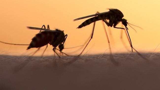 Jak odstraszyć komary? Skuteczne metody, które przydadzą się latem