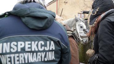 Inspekcja Weterynaryjna. Otwarcie targu w Skaryszewie