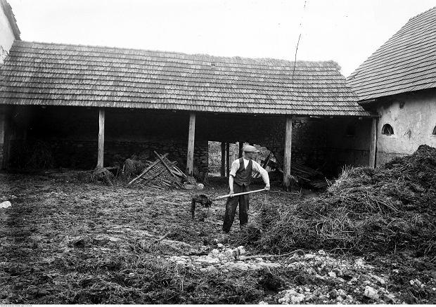 Prace w gospodarstwie we wsi Bolechowice, 1933 r.