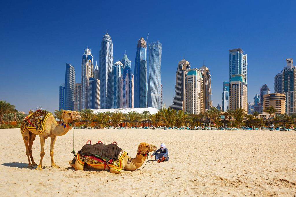 =The,Camels,On,Jumeirah,Beach,And,Skyscrapers,In,The,Backround