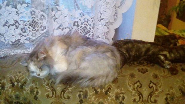 Zdjęcie numer 70 w galerii - Karmel, Daktyl, Kapitan Benny, Ptyś, Wiesław... Kochane i piękne - oto Wasze koty [GALERIA NA DZIEŃ KOTA]
