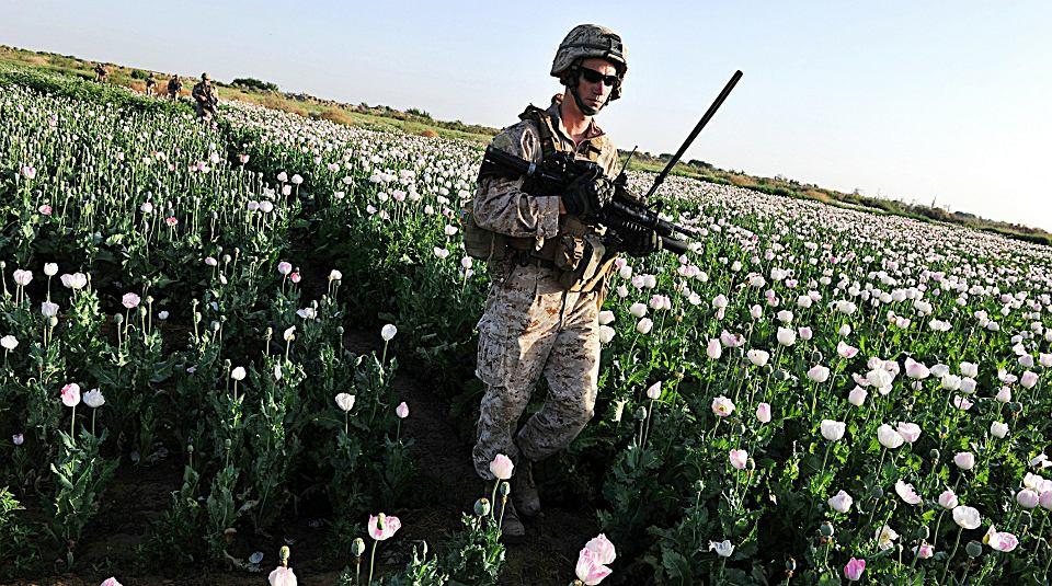 Plantacje maku opiumowego. Porucznik amerykańskiej armii TJ Ruyle podczas patrolu w afgańskiej prowincji Helmand, plantacje maku opiumowego nie są w tej okolicy czymś niezwykłym