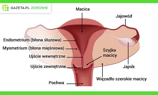montaż człowieka narządów płciowych