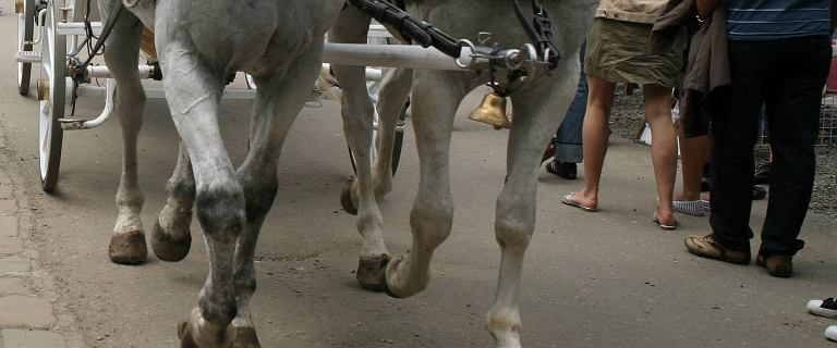 Koń kopnął 7-latkę na Gubałówce. Dziecko w szpitalu, woźnica nietrzeźwy