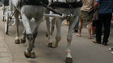 Zakopane. Spłoszony koń kopnął dziecko (zdj. ilustracyjne)