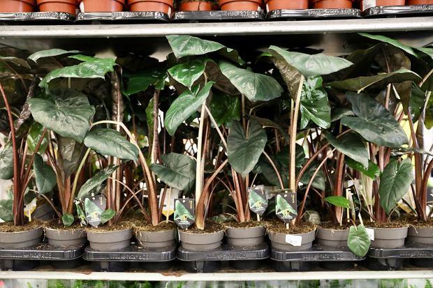 Zdjęcie numer 19 w galerii - Zazieleniły się targi w ten weekend. Trwa Festiwal Roślin i ich wyprzedaż. Zobacz, co można tam kupić  [ZDJĘCIA]