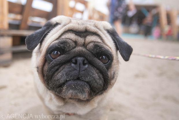 Zdjęcie numer 0 w galerii - Urodziny Ekostraży w Basen Beach Barze. Gośćmi specjalnymi były zwierzaki [ZDJĘCIA]