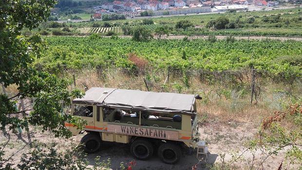 Winnice niedaleko Bratysławy