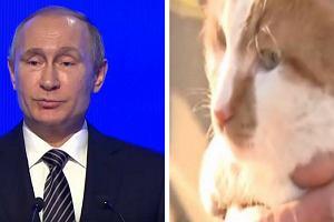 Władimir Putin ma otworzyć dziś most prowadzący z Rosji na Krym. Pierwszy zrobił to jednak... kot