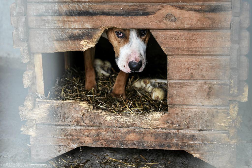 Schronisko dla zwierząt / Zdjęcie ilustracyjne